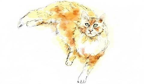 猫(12)