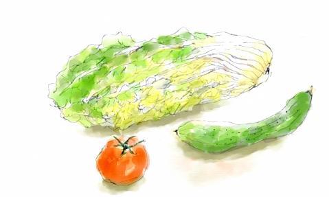 白菜ときゆうり