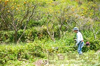 20130428甘夏畑 草刈り1