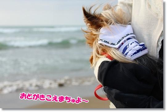 IMG_0203a.jpg