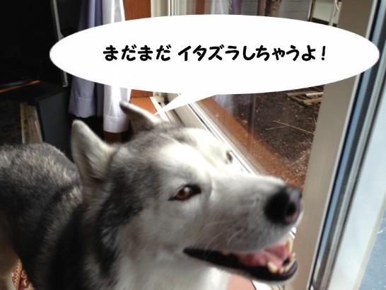 happyniko2.jpg