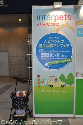 interpets201301.jpg