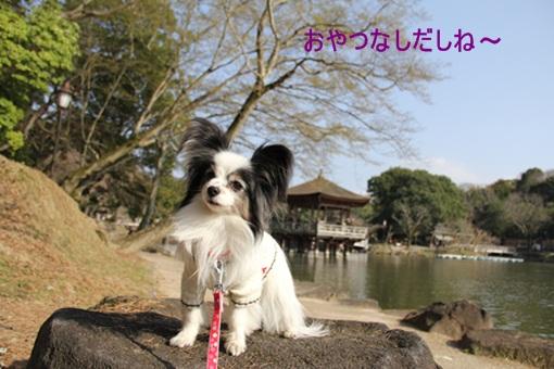 奈良公園3032510