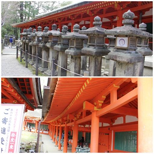 奈良公園303254