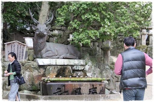 奈良公園303252