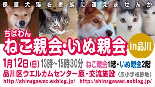 nekoinuoyakai20140112_320x180.jpg