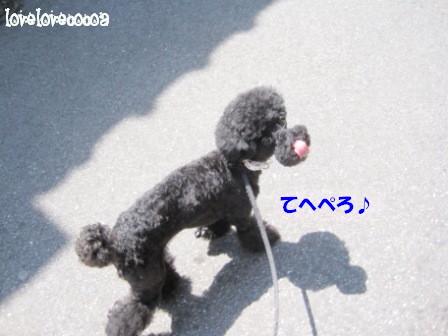 IMG_0225-cocoa_20130430174954.jpg