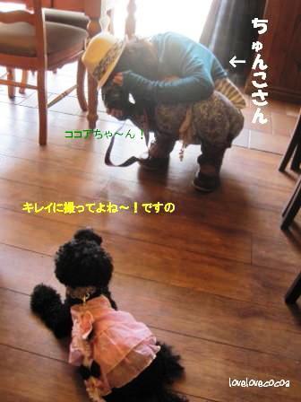 IMG_0736-cocoa_20130710182714.jpg