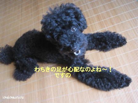 IMG_2813-cocoa_2013073013264008e.jpg