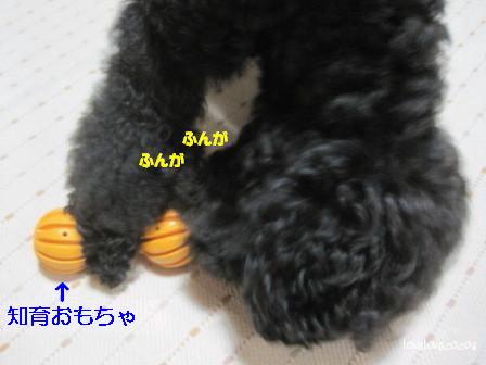 IMG_2847-cocoa_20130918190157464.jpg