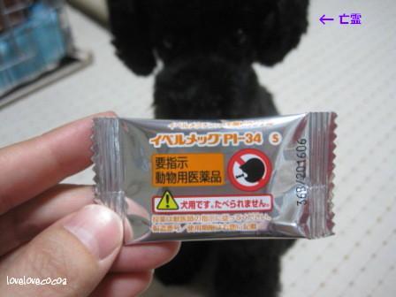 IMG_3251-cocoa_2013080719373375d.jpg