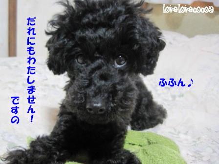 IMG_8183-cocoa_20130328001829.jpg