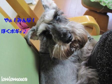 IMG_9145-cocoa_20130412221637.jpg