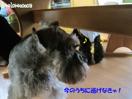 IMG_9153-cocoa_20130412221919.jpg