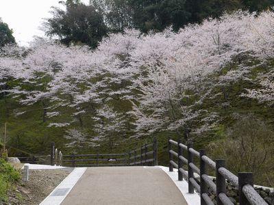 桜滝&遊歩道NO2