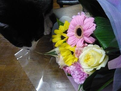 花束とキキ