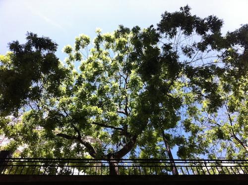 arbres_1606.jpg