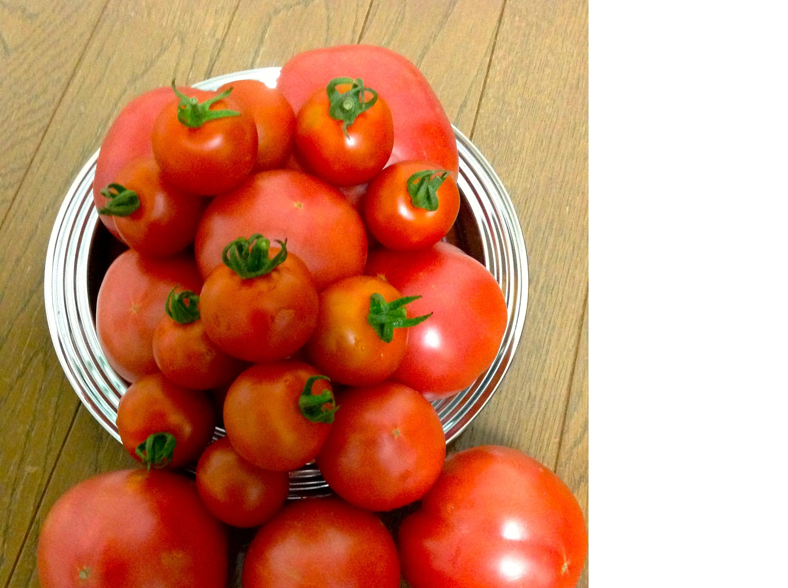 tomatojikka.jpg