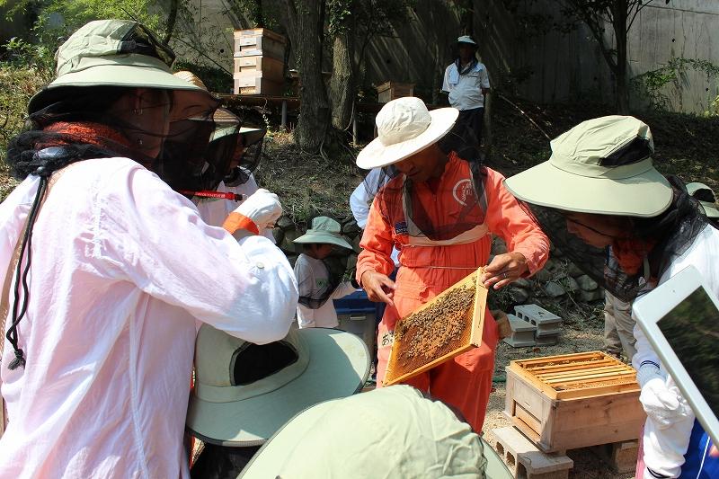 ミツバチ見学①