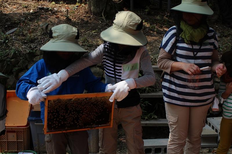 ミツバチ見学②