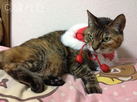 クリスマス2013_1