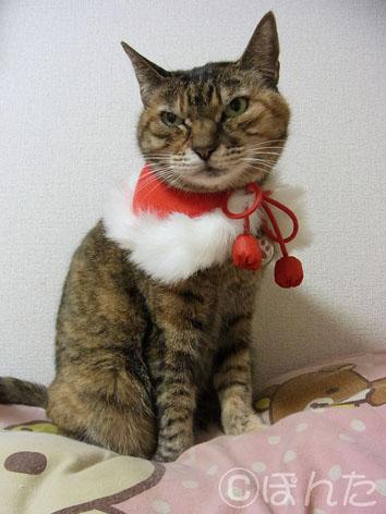 クリスマス2013_2