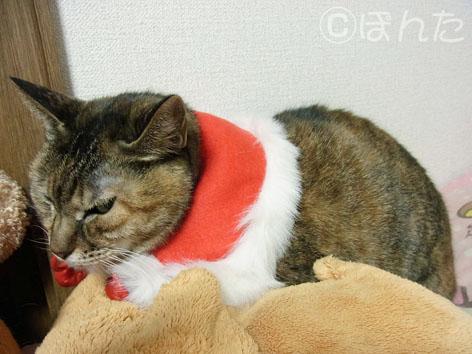 クリスマス2013_6