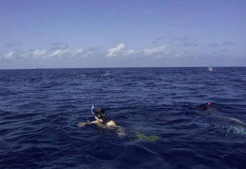 クジラ記念写真Sperm Whale Encounter