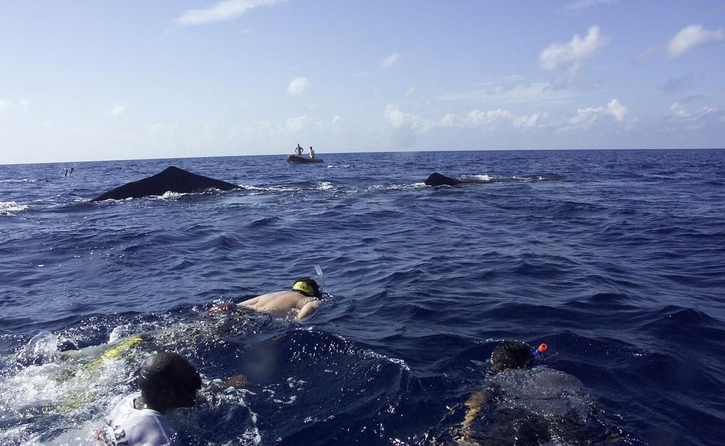 満田先頭Sperm Whale Encounter