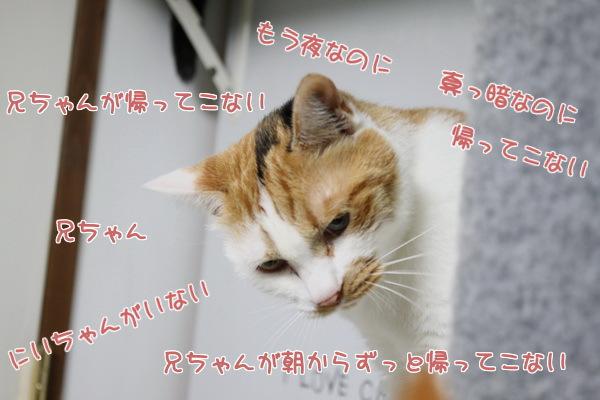 5兄ちゃん