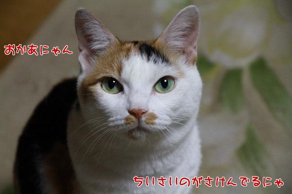 8_20130808020941694.jpg