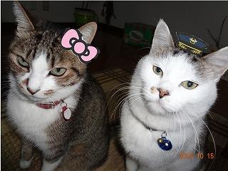 猫リボンと帽子