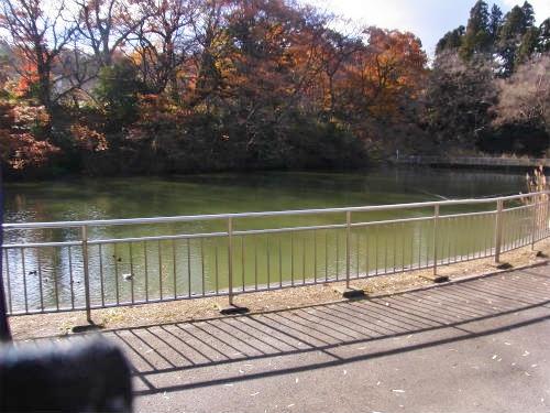 仙台城の濠