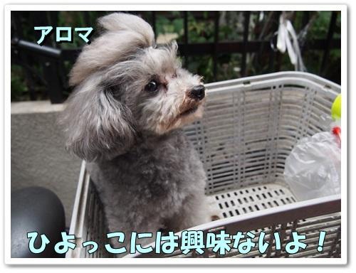 20130521_028.jpg