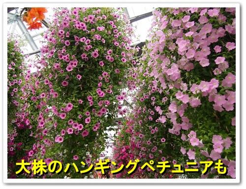 20130525_370.jpg