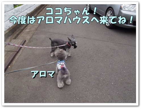20130610_075.jpg