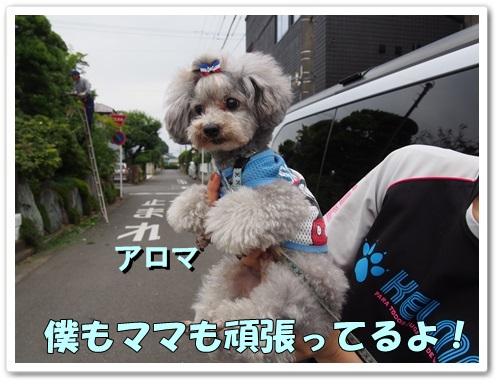 20130610_081.jpg