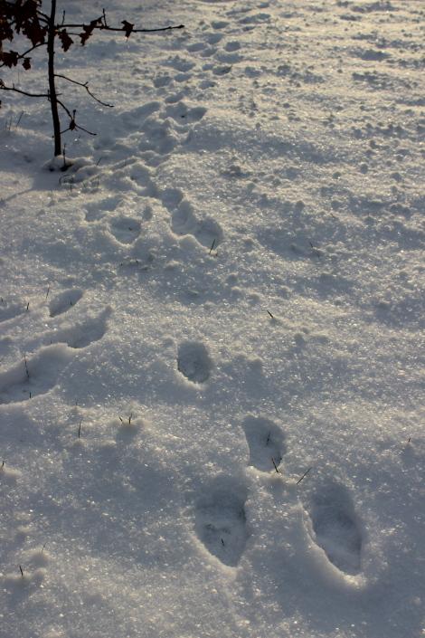 Lumi piha Rusakko