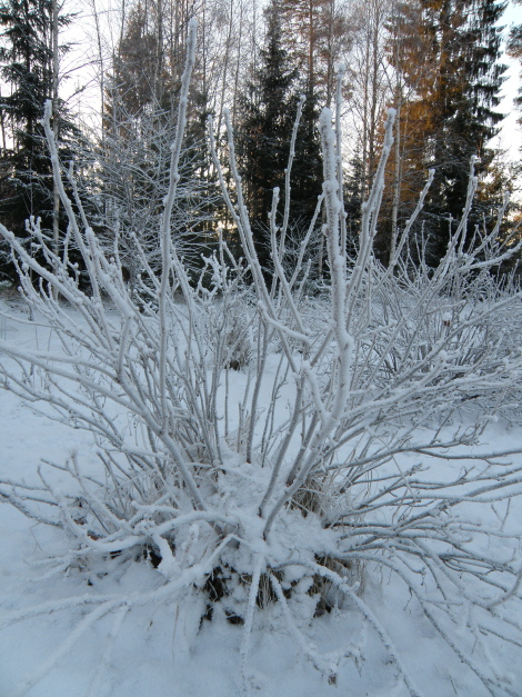 Talvimaisema Piha