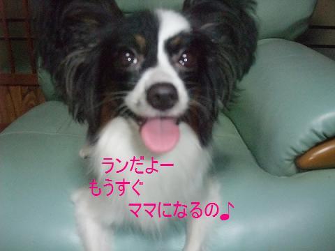 2013_1007モージョファミリー0014