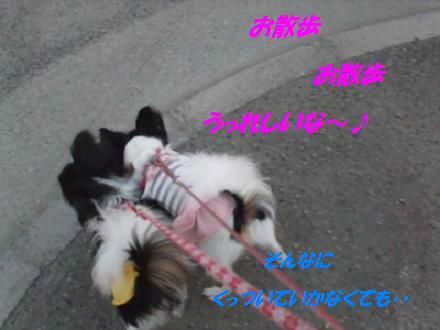 2013_1014モージョファミリー0008