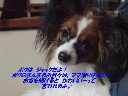 BLOG2013_1014モージョファミリー0016