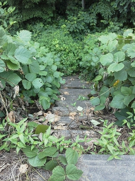 入口から階段KIMG0008