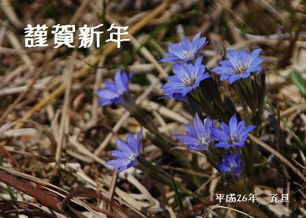 harurindou26nenga.jpg
