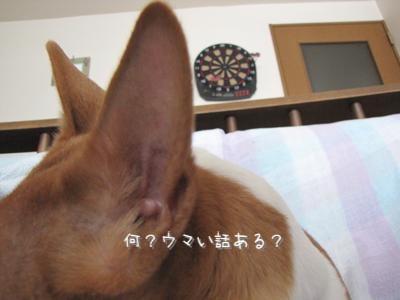 th_IMG_0604.jpg