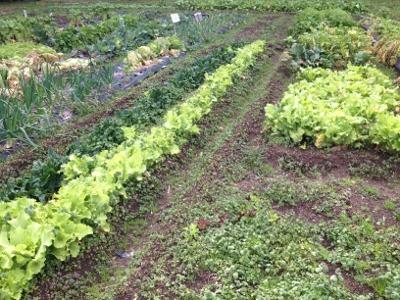 2014.2.9家庭菜園3