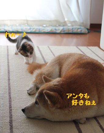 しっぽ~♪