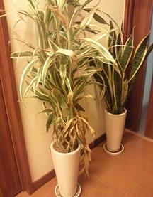 悲しい植物たち…