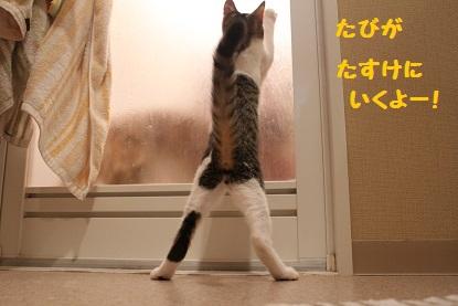 立つたび!
