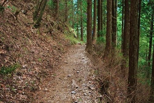 川苔山28